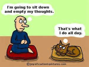 Meditation cartoon cats