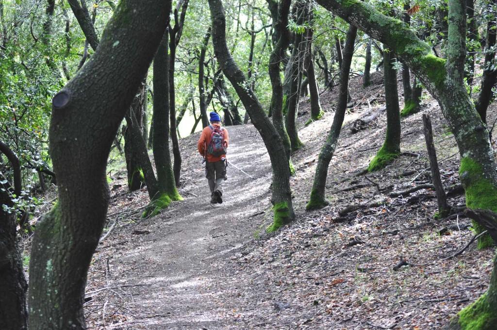 Hiker in woods Miriam Nuney DSC_0221
