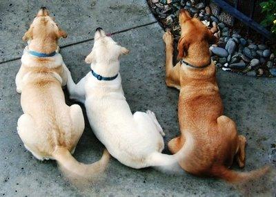 DogsWaggingTailsDogTrainingSecret